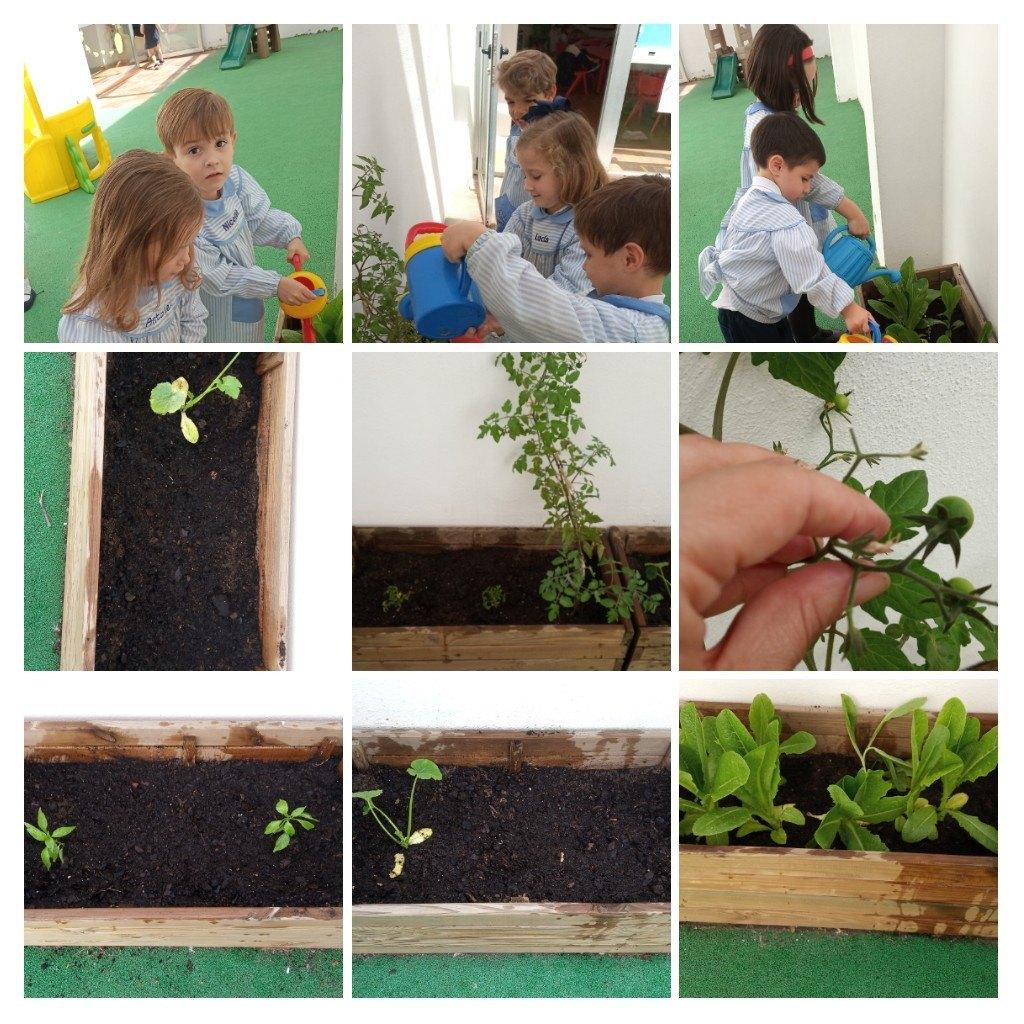 Plantando en el huerto de Guppy 2